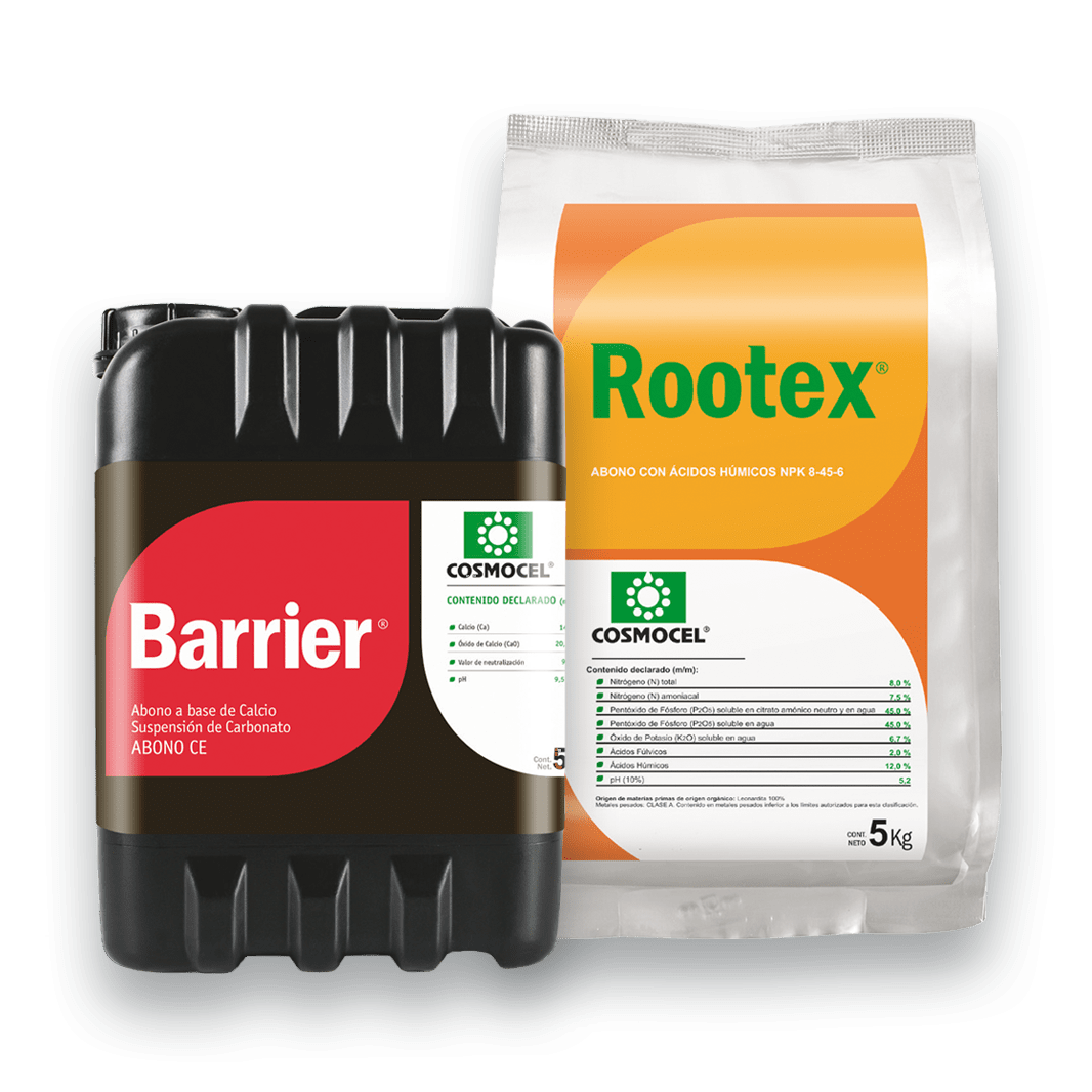Rootex y Barrier